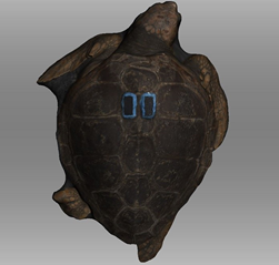3D scan turtle