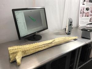 3D scan Alligator Tail